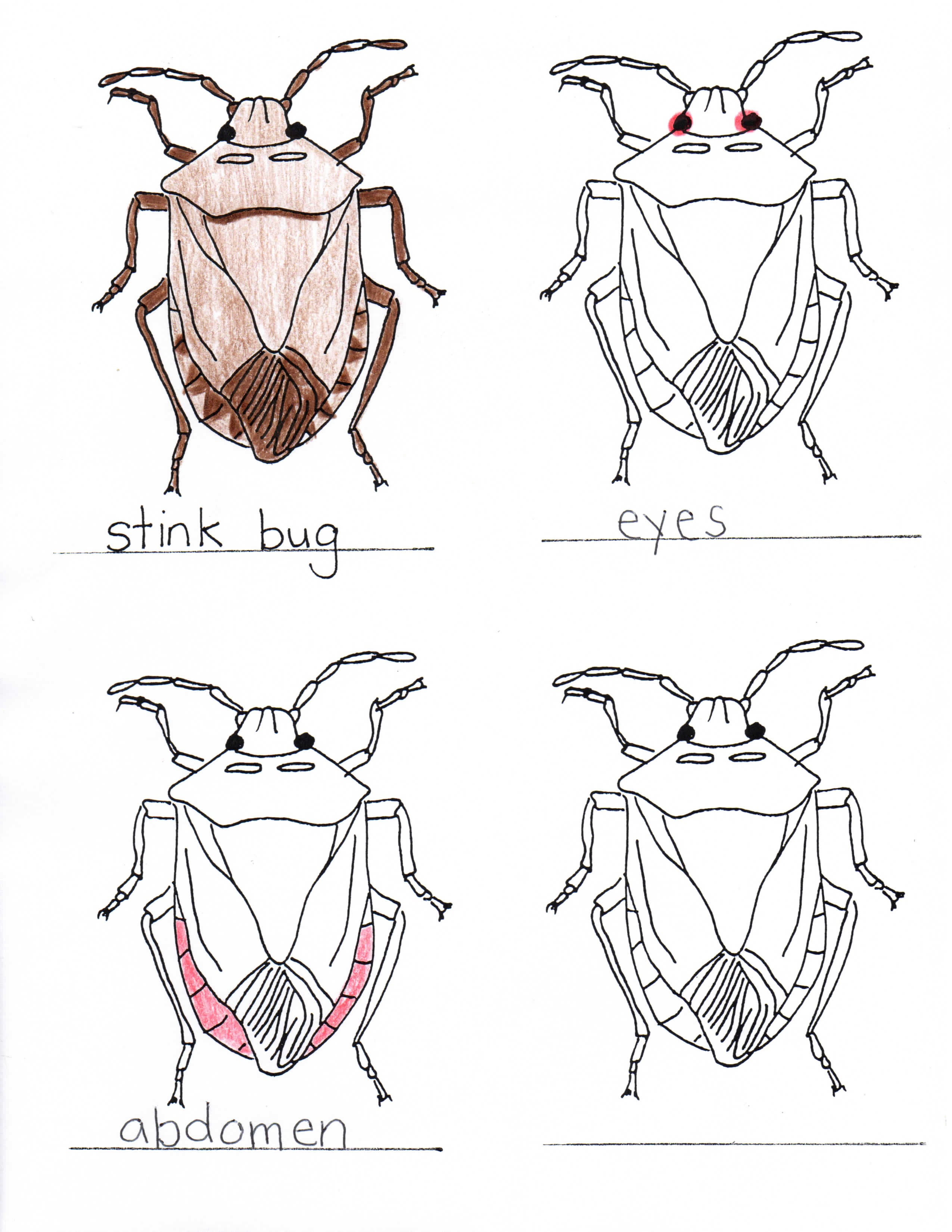 Parts Of A Stink Bug