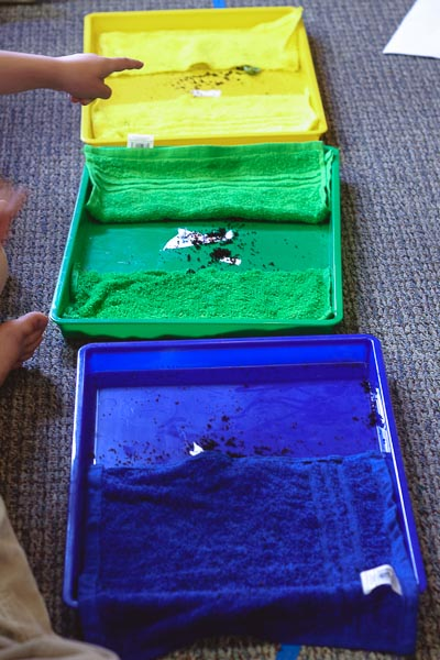 fundamental needs of worms - a montessori science work | montessori works